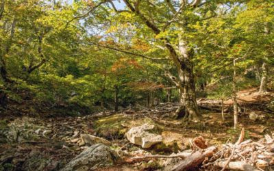 Forest Management and Climate Change