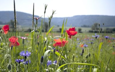 European Partnership on Biodiversity