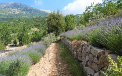 Forest and Landscape Restoration in the Shouf Biosphere Reserve